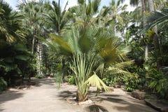 En äng med den tropiska växten och gräs och träd och stenar och staty i Nong Nooch den tropiska botaniska trädgården nära den Pat Royaltyfria Bilder