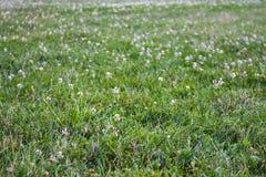 En äng mycket av gräs Royaltyfri Bild
