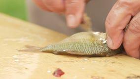 En åldringfiskare gör ren en liten fisk Förbereder en maträtt för familjen stock video