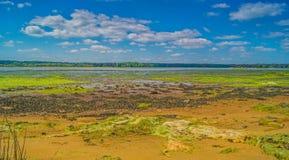 En öde färgglad Dorset våtmarkstrand Royaltyfria Bilder