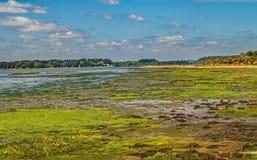 En öde färgglad Dorset våtmarkstrand Royaltyfria Foton