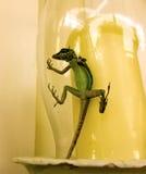 En ödla som fångas i en glass stearinljusskugga Arkivfoto