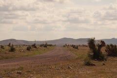 En ökenväg Arkivfoto
