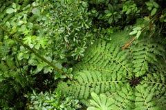 En över huvudet sikt ger ett olikt perspektiv av rainforestgolvet i det Monteverde molnet Forest Reserve arkivbilder