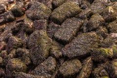 En överkant ner den täckte sikten av havsogräset vaggar på lågvatten som är halt, när den är våt royaltyfri fotografi