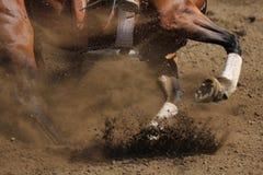 En övre sikt för slut av galoppera för häst Royaltyfri Fotografi