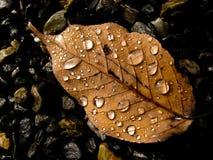 En último otoño Imagen de archivo libre de regalías