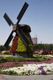 En abril de 2015 Parquee el callejón con muchas flores y molino grande Dubai MIR fotografía de archivo