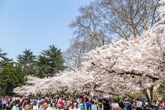 En abril de 2016 - Qingdao, China - turistas durante el festival de las flores de cerezo Imagen de archivo