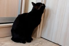 En absolut svart katt sitter vid dörren och väntar på den för att öppna royaltyfria foton