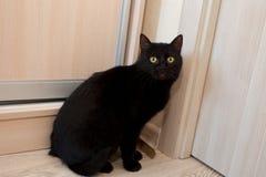 En absolut svart katt sitter vid dörren och väntar på den för att öppna royaltyfria bilder