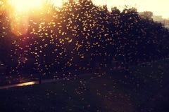 En affär av flugor som poserar för ett foto royaltyfri fotografi