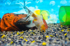 En akvariumklick arkivfoto