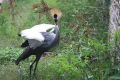 En alarmerad fågel Arkivbilder