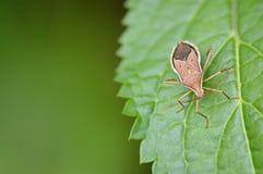 Skalbagge på en leaf Arkivbilder