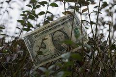 En amerikansk dollar på trädet royaltyfria foton