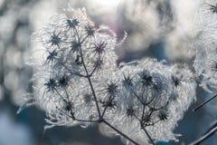 En andedräkt av vintervind Arkivbilder