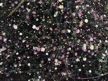 En andra blomma blommor royaltyfria bilder