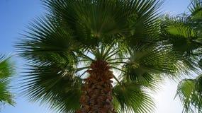 En angenäm bakgrund av sommarsemestern Arkivbilder