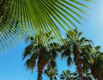 En angenäm bakgrund av sommarsemestern Fotografering för Bildbyråer