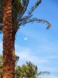 En angenäm bakgrundsimbol av sommarsemestern Arkivfoto