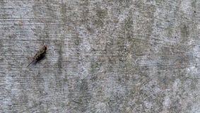 En annan art av gräshoppan i min trädgård Fotografering för Bildbyråer