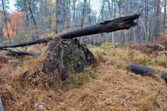 en annan fallen övre tree Fotografering för Bildbyråer