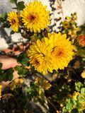 En annan härlig blomma Royaltyfria Bilder