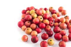 En annan jamaikansk körsbärsröd frukt är Malayan Cherry Calabura Driftstopp på en vit bakgrund royaltyfri bild