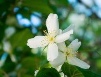 En annan vit blomma Arkivbilder