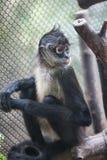 En apa i en bur royaltyfria bilder