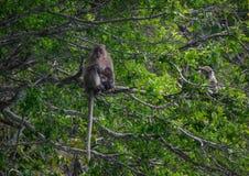 En apa med behandla som ett barn apan på träd Fotografering för Bildbyråer