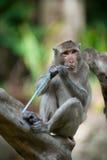 En apa sitter på trädet Arkivfoton