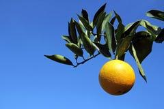 En apelsin Royaltyfri Fotografi
