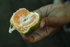 En apelsin som skalas av handen Den nya lokala apelsinen med gräsplan skalar Sund frukt, sund matcloseup royaltyfri bild