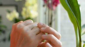 En appliquant la lotion crème de lubrifiant exposez au soleil la protection sur le plan rapproché endommagé de peau de doigt banque de vidéos