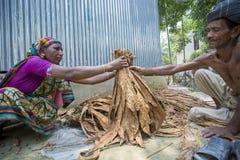 En arbetare för gammal kvinna som bearbetar gruppen av tobak i Dhaka, manikganj, Bangladesh Arkivfoton
