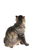 En arrière du chat Photo libre de droits