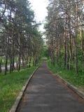 En asfaltväg som går till och med pinjeskog royaltyfria bilder