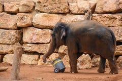 En asiatisk elefant i zoo Arkivbilder