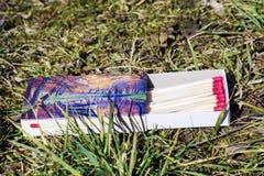 En ask av trämatcher Royaltyfri Foto
