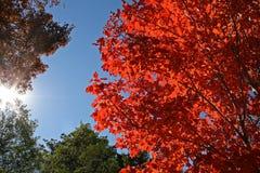 En automne Image stock