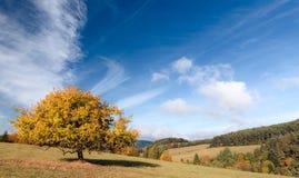 En Autumn Mood Fotografía de archivo libre de regalías