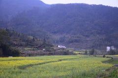 En av Huangshan royaltyfria bilder