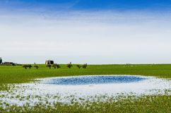 En avlägsen sikt av den Cockersand abbotskloster med flodded fält Royaltyfria Foton