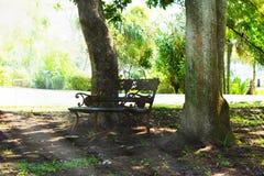En bänk under en trädwayside Royaltyfri Foto