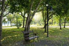 En bänk under ett träd och belysning i trädgården parkerar i Bangkok Royaltyfria Bilder
