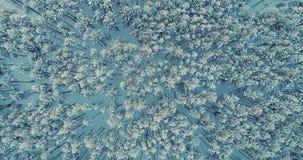 En bästa sikt på en djup skog med träden som täckas i snö 4K arkivfilmer