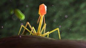 En bacteriophage på bakterier vektor illustrationer