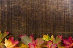 En bakgrund dekorerade med färgglade höstsidor, med kopia s Arkivfoton